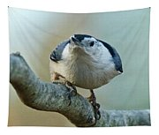 Angry White Breasted Nuthatch Tapestry