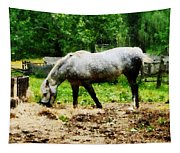 Appaloosa Eating Hay Tapestry