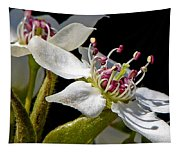 Apple Blossem In Sunlight Tapestry