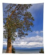 Arbutus Tree At Rathtrevor Beach British Columbia Tapestry