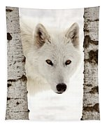 Arctic Wolf Seen Between Two Trees In Winter Tapestry