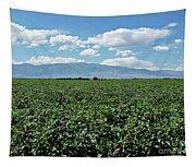 Arizona Cotton Field Tapestry