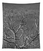 Arizona Sycamore Tree Filtered 022714 Tapestry