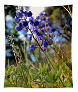 Arroyo Lupine Four Tapestry