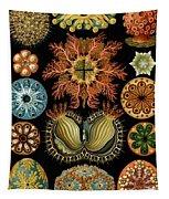 Ascidiae Tapestry
