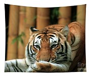 Asian Tiger 5 Tapestry