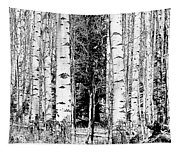 Aspens And The Pine Black And White Fine Art Print Tapestry