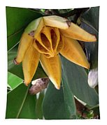 Autograph Tree Seed Pod Tapestry