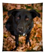 Autumn Dog Tapestry by Adam Romanowicz