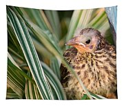 Baby Bird Peering Out Tapestry
