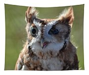 Cute Screetch Owl Tapestry