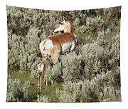 Baby Pronghorn Feeding Tapestry