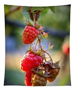 Backyard Garden Series - The Freshest Raspberries Tapestry