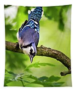 Balanced Blue Jay Tapestry