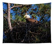 Bald Eagle In The Nest Tapestry