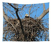 Bald Eagle Lookout  3661 Tapestry