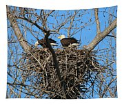Bald Eagles Working On The Nest   3682 Tapestry