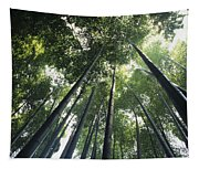 Bamboo Forest Tapestry