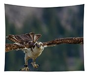 Banded But Bold Tapestry