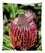 Banksia In Red Tapestry
