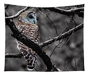 Barred Owl Hungry  Tapestry