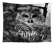 Barred Owl In Black And White Tapestry