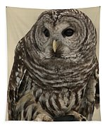 Barred Owl Tapestry