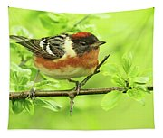 Bay-breasted Warbler Tapestry