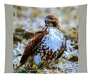 Beautiful Hawk Tapestry