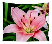 Beautiful Pink Lily Tapestry