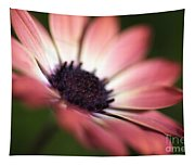 Beautiful Rich African Daisy Zion Red Flower Tapestry