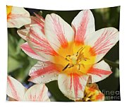 Beautiful Tulip With A Yellow Center And Pink Striped Petals Tapestry