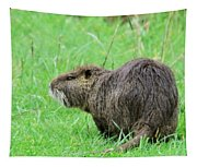Beaver With Whiskers Tapestry