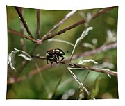Beetle Balances On Branch Tapestry