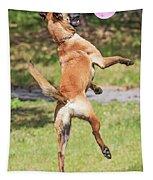 Belgian Shepherd Dog Tapestry