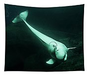Beluga Whale 3 Tapestry