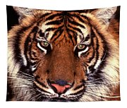 Bengal Tiger - 2 Tapestry