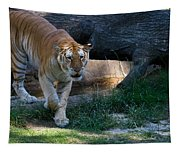 Bengal Tiger On The Prowl Tapestry