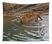 Bengal Tiger Wading Stream Tapestry