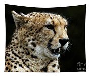 Big Cats 101 Tapestry