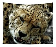 Big Cats 50 Tapestry