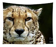 Big Cats 51 Tapestry