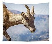 Bighorn In Yellowstone Tapestry