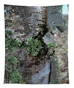 Birch Bark 1 Tapestry