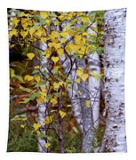 Birch In Autumn Tapestry