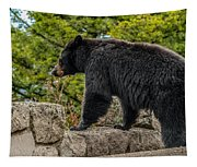 Black Bear Boar Taking In The Sights Tapestry