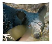 Black Bear Oh My Tapestry