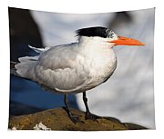 Black Crested Gull Tapestry