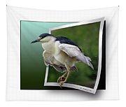 Black Crowned Night Heron Tapestry