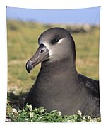 Black Footed Albatross Tapestry